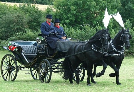 Black Horse Drawn Carriage.jpg